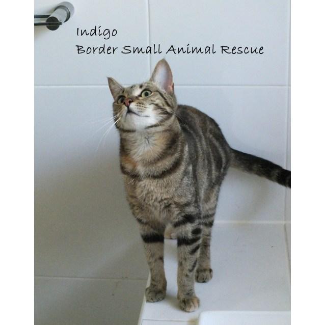 Photo of Indigo