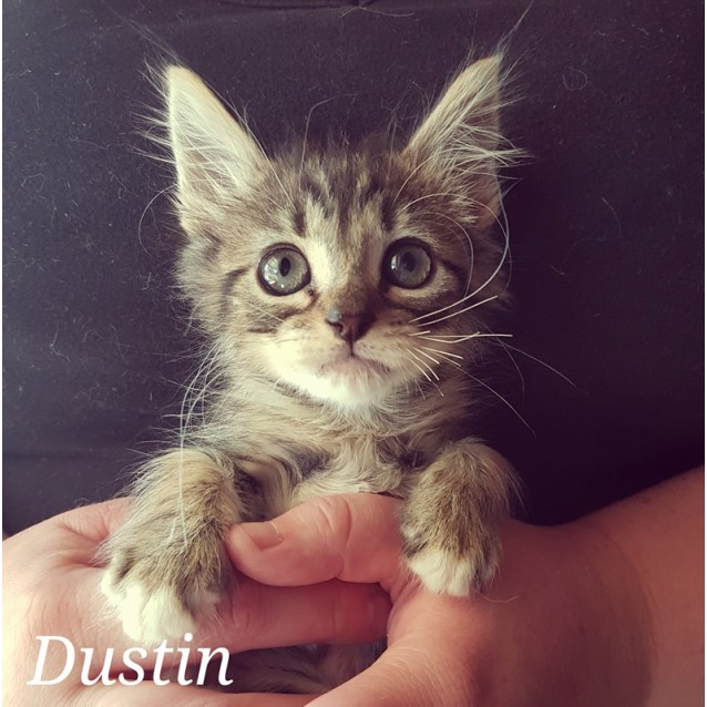 Photo of Dustin