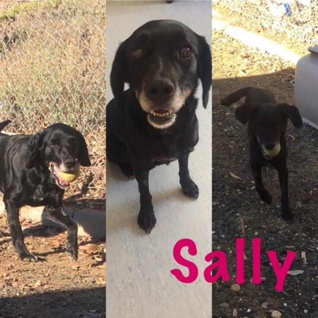 Photo of Sally