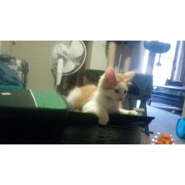 Photo of Crackle