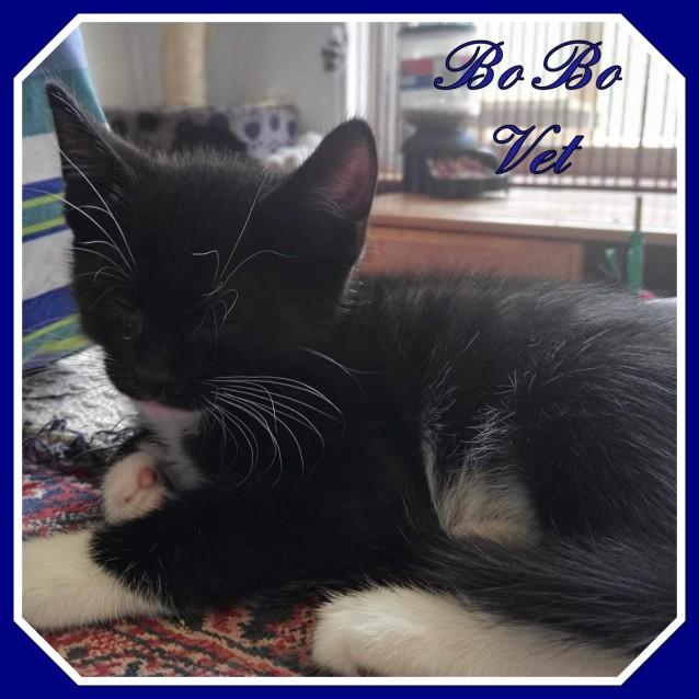 Photo of Bo Bo Vet