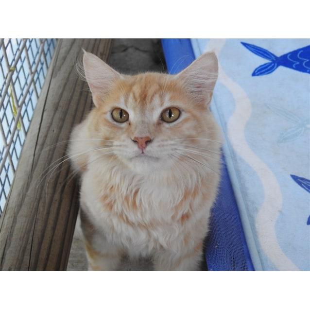 Photo of Garf