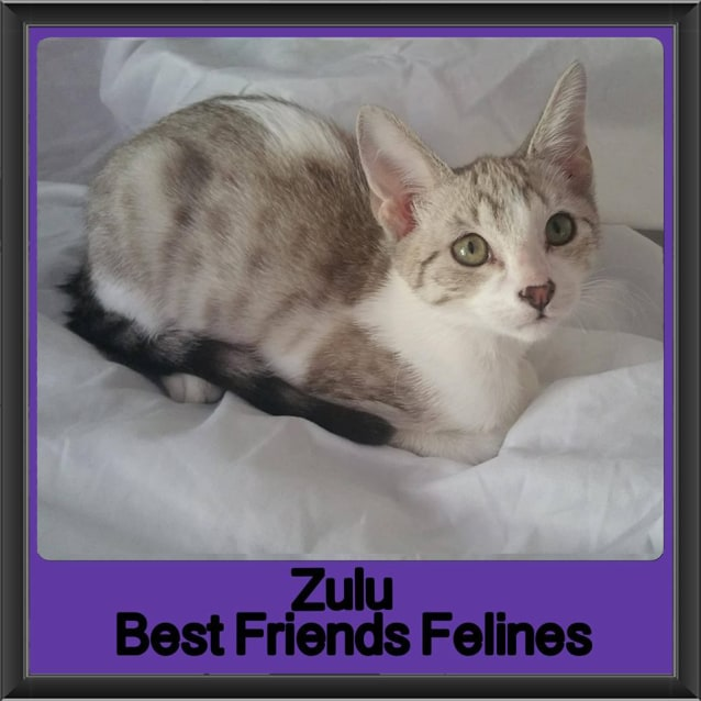 Photo of Zulu
