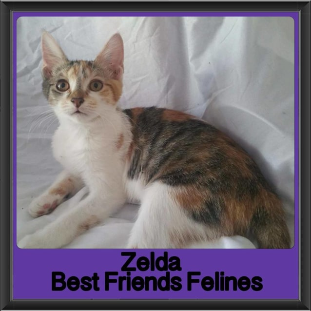 Photo of Zelda