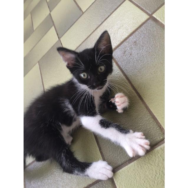 Photo of Riki