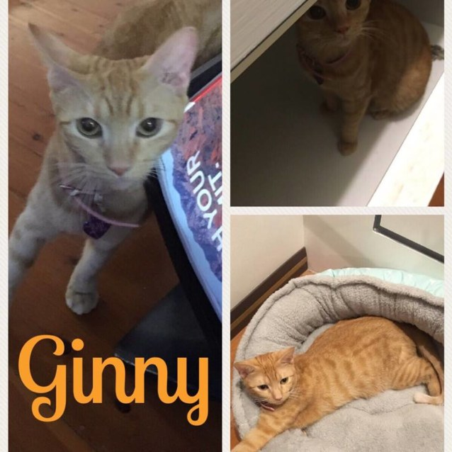 Photo of Ginny