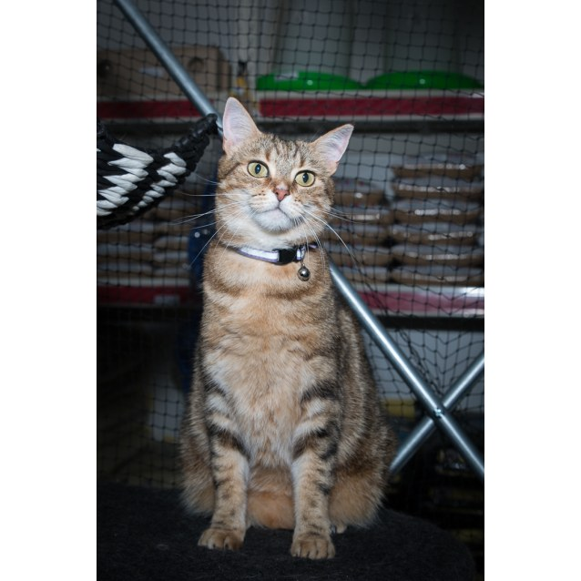 Photo of Izzie **On Trial With My New Family**