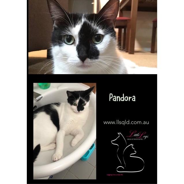 Photo of Pandora