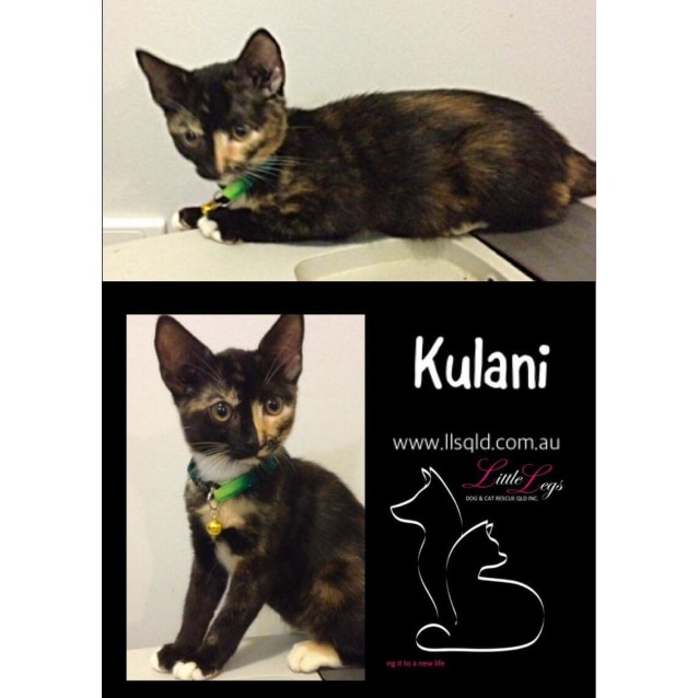 Photo of Kulani