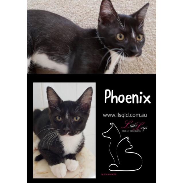 Photo of Phoenix