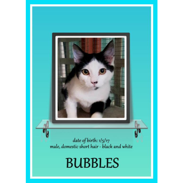 Photo of Bubbles