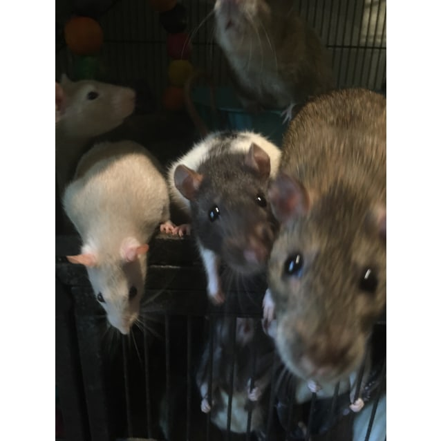 Photo of Marli, Mille, Mews & Mary