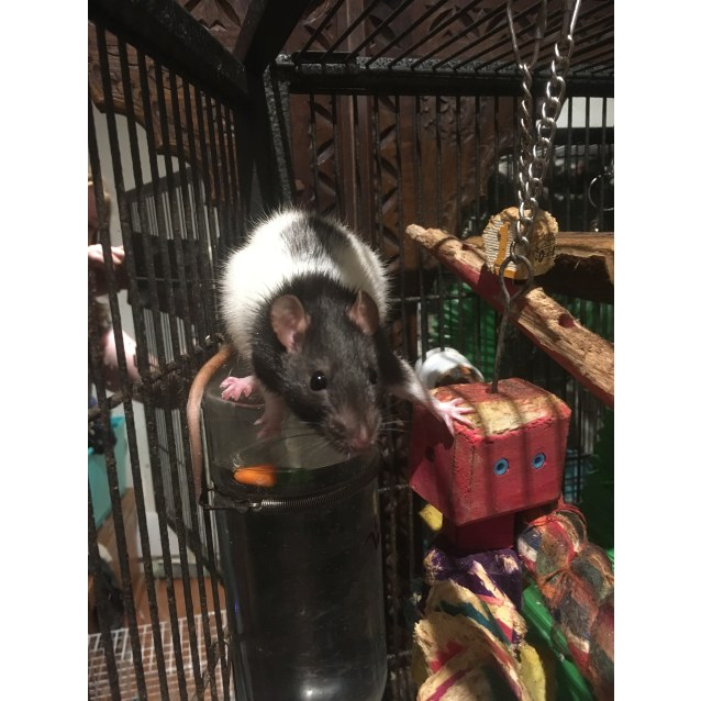 Photo of Marli