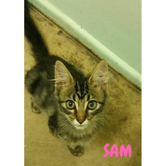 Photo of Sam Girl