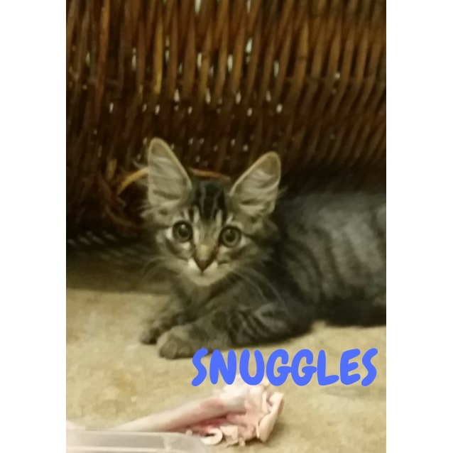 Photo of Snuggles