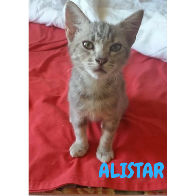 Photo of Alistar