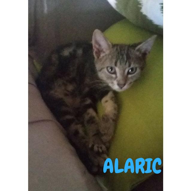 Photo of Alaric