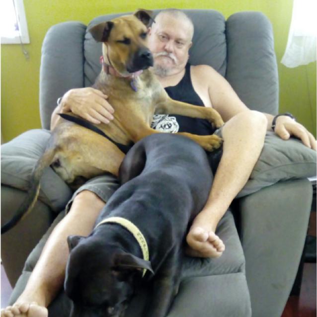 Photo of Cleo ~ Mastff X Ridgeback Relisted 9/5/18