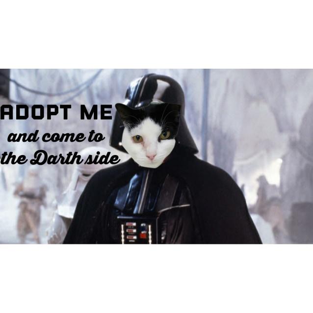 Photo of Darth