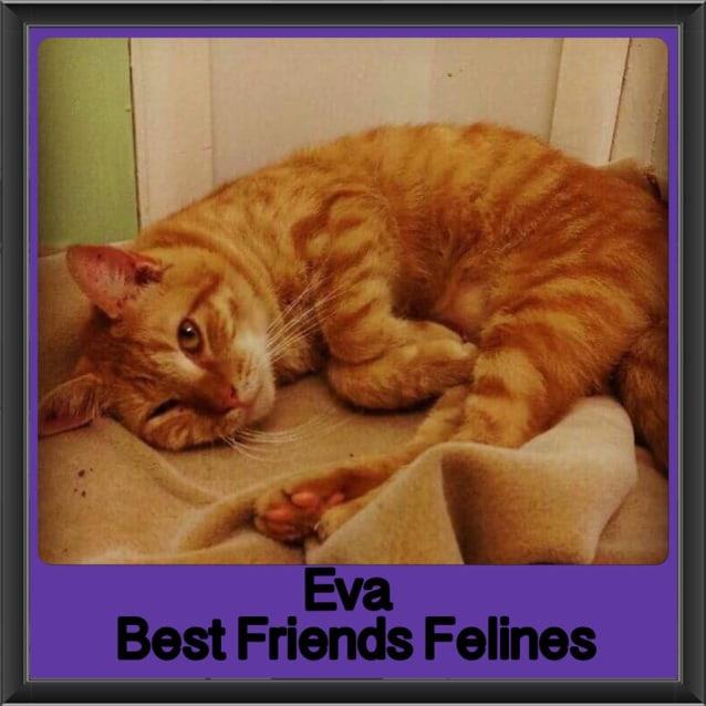 Photo of Eva