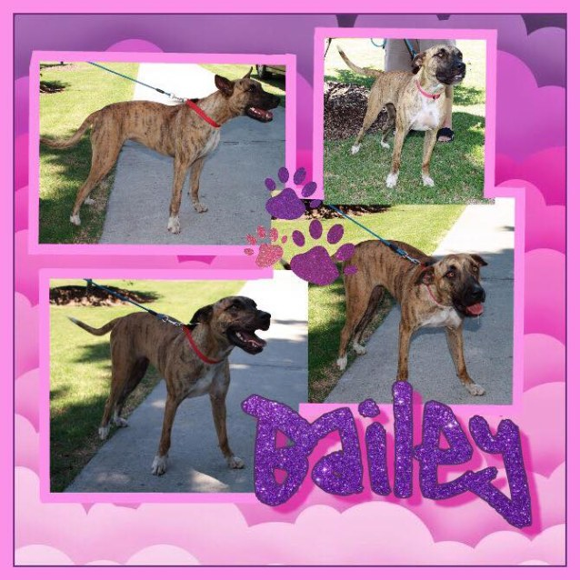 Photo of Bailey