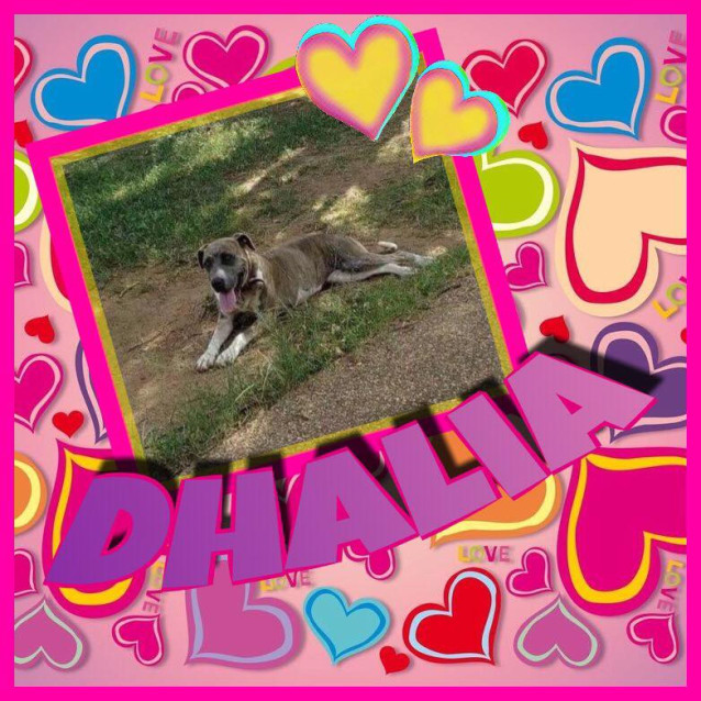 Photo of Dahlia