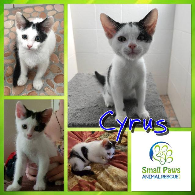 Photo of Cyrus