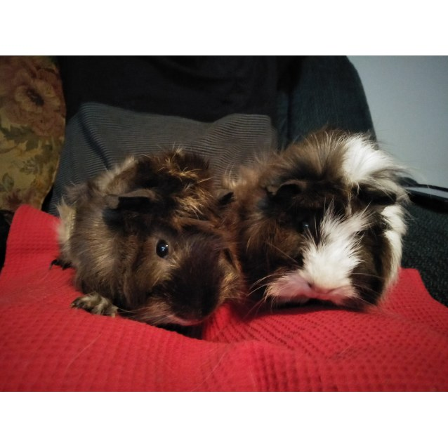 Photo of Truffles And Biscuit