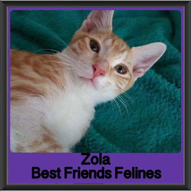 Photo of Zola