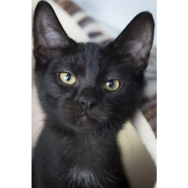 Photo of Odi