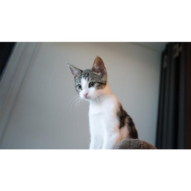 Photo of Parisa