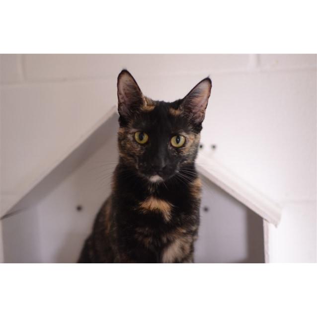 Photo of Isla