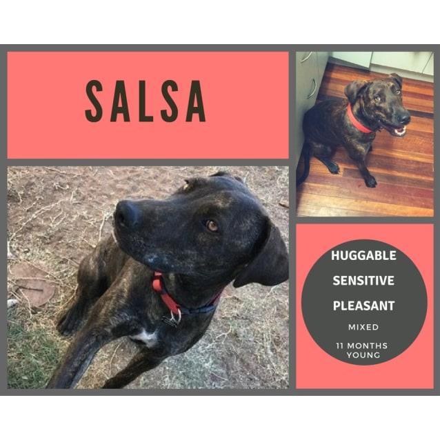 Photo of Salsa
