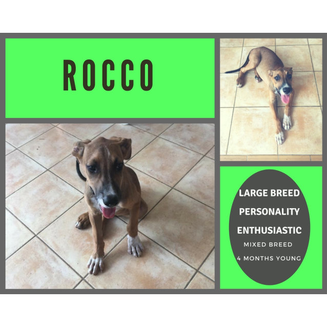 Photo of Rocco