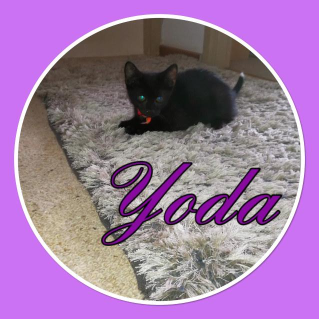 Photo of Yoda