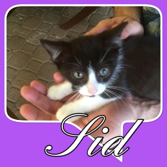 Photo of Sid