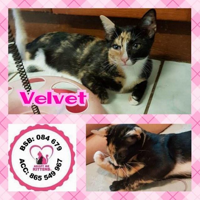 Photo of Velvet