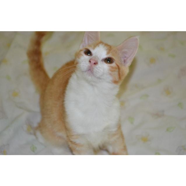 Photo of Maple