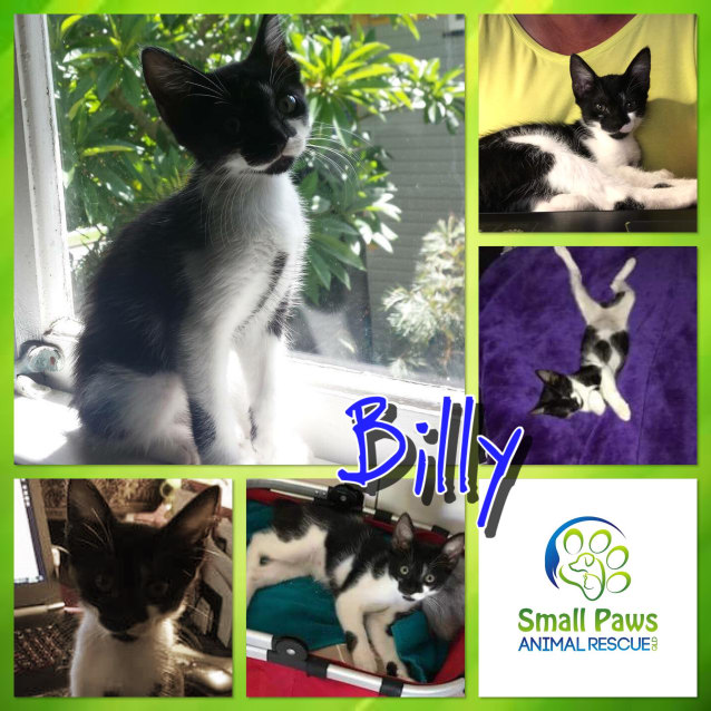 Photo of Billy
