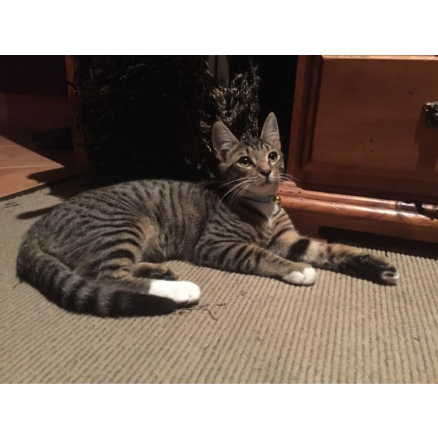 Photo of Benji