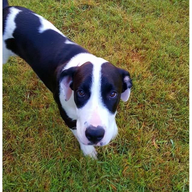 Photo of Bonnie (Adoption Pending)