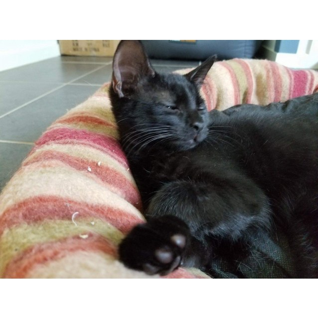 Photo of Malcolm **2nd Chance Cat Rescue**
