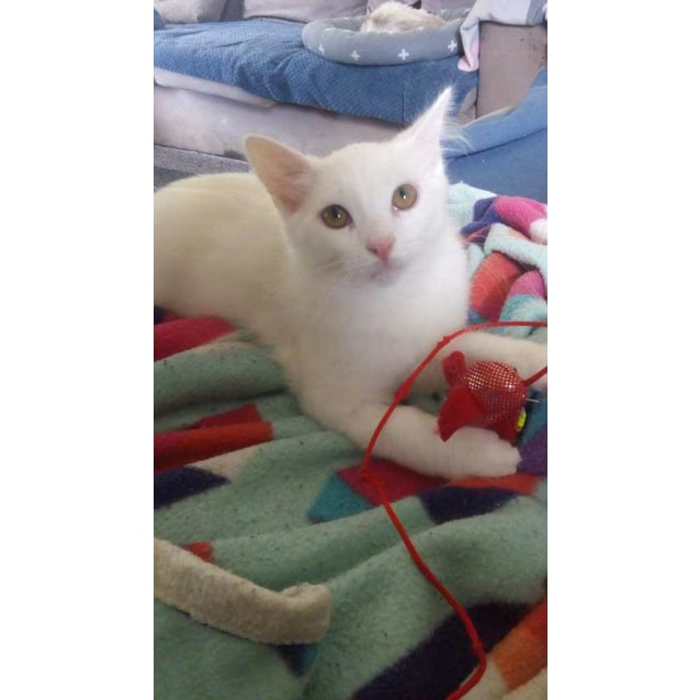 Photo of Whisper (Located In Boronia)