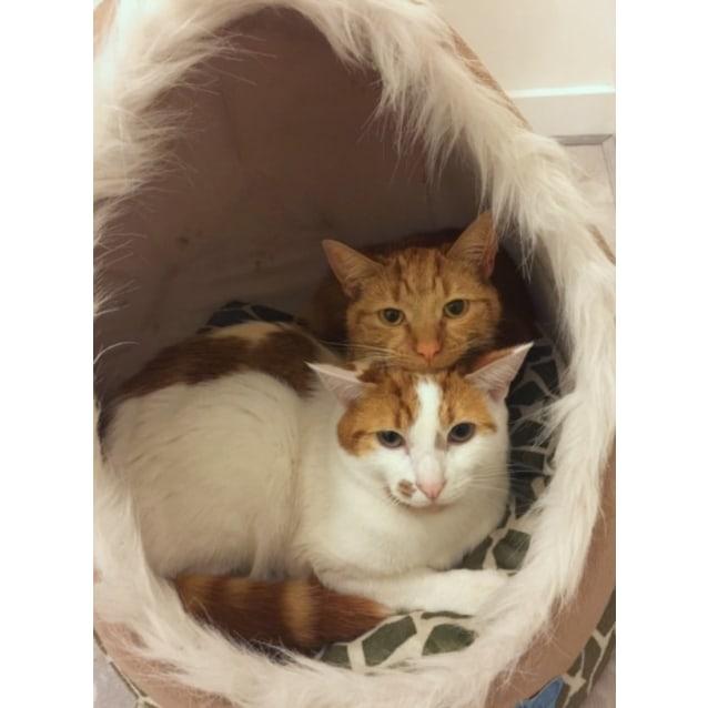 Photo of Ari & Geri