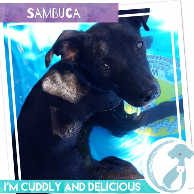 Photo of Sambucca