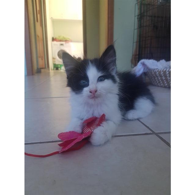 Photo of Apollo (Now Mimi)