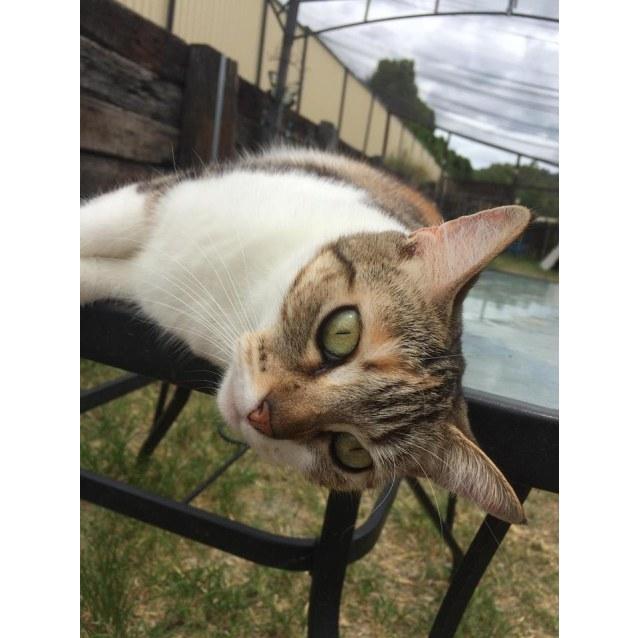 Photo of Missie