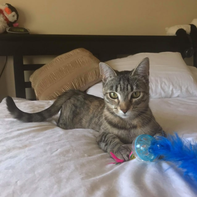 Photo of Twix (Located In Bentleigh East)