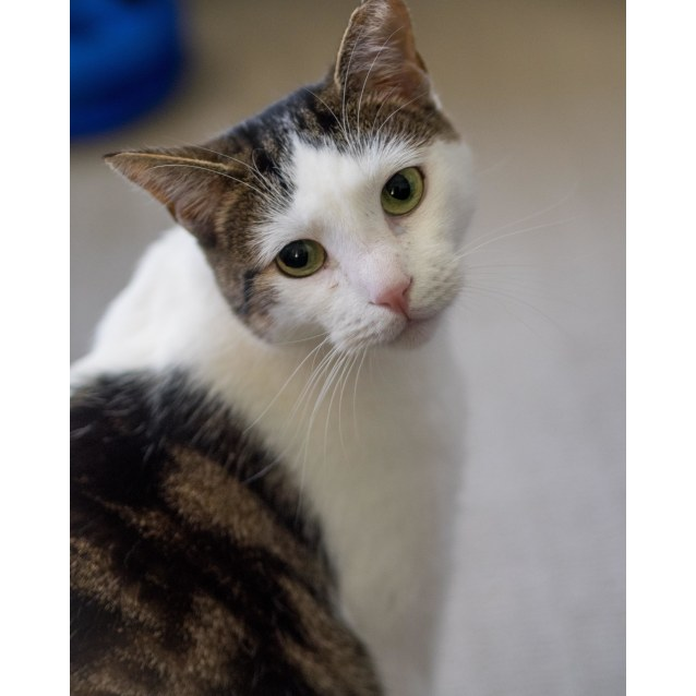 Photo of Oscar **Adopted & On Trial With My New Family**