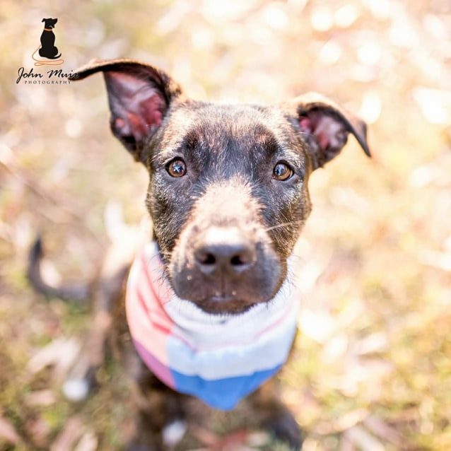 Photo of Sandy (Adoption Pending)